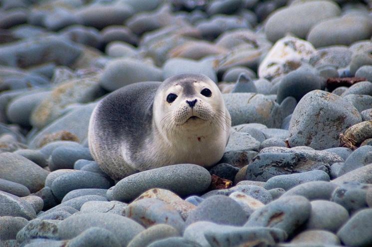 Winter Beach Walks to See Seals